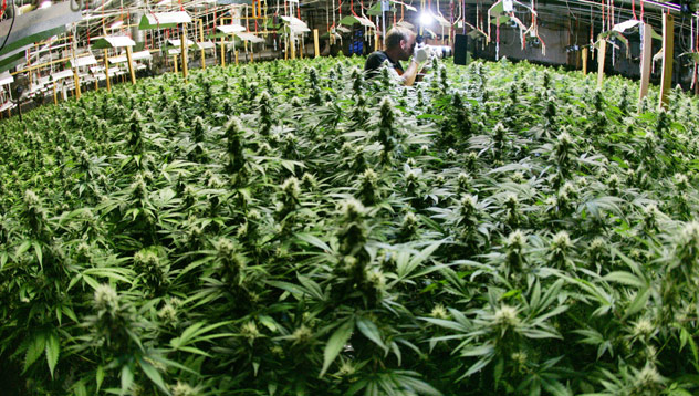 Marijuana Warehouse